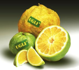 ugly-fruit-1