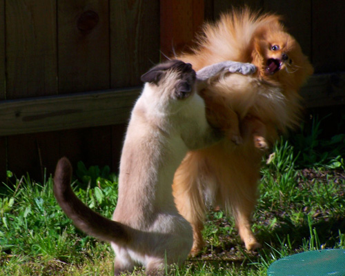cat-dog-fight