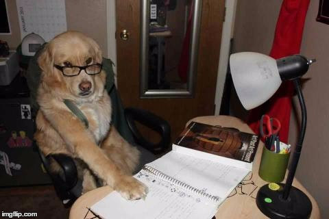 financialdog