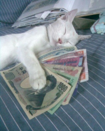 money_cat