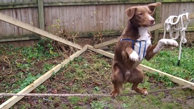 tightrope dog