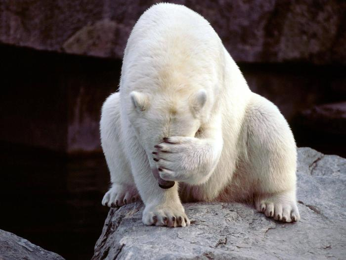 facepalm_bear