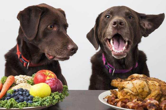 dog-diet.jpg.838x0_q67_crop-smart